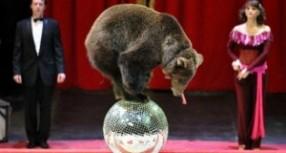 Malta'daki sirklerde hayvan kullanımı yasaklandı